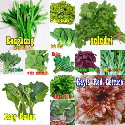 Benih Tomat Harga Per 1 Sachet hidroponik daftar benih sayuran 3ribu per sachet di griya hidroponikku
