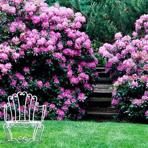 best all year plants top 28 all year flowering plants australia gardening australia plant profile lavandula 28