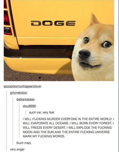 best of the doge meme 15 pics meme collection