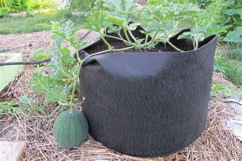 coltivazione in vaso coltivazione anguria coltivazione ortaggi come