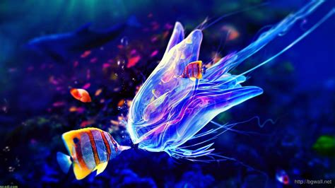 wallpaper wide colorful colorful jellyfish wallpaper widescreen background