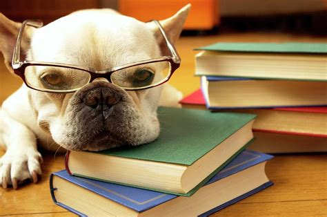 puppy studying study by quilie