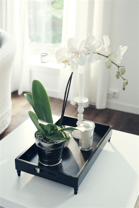 Bibit Anggrek Lazada bunga untuk ruang tamu desainrumahid