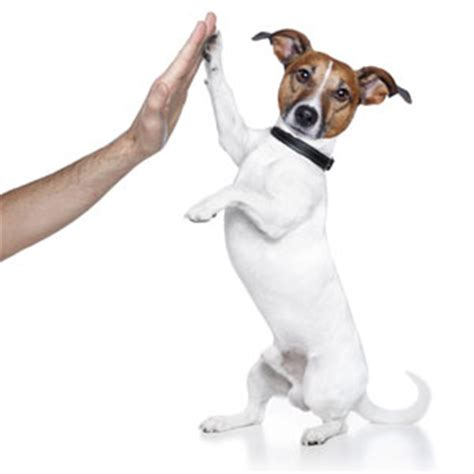 can dogs get high from how to be clever and not annoying when asking for a favour lifehacker australia