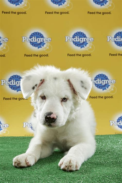 2017 puppy bowl lineup puppy bowl 2017 live time tv schedule lineups and how to