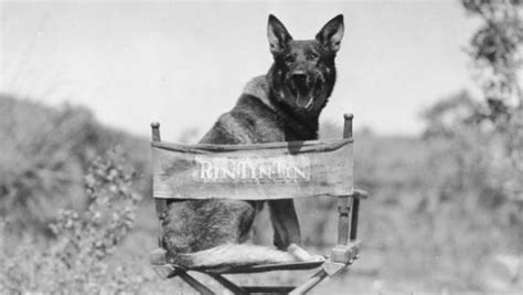 Rin Tin Tin when warner bros went to the s silver screenings