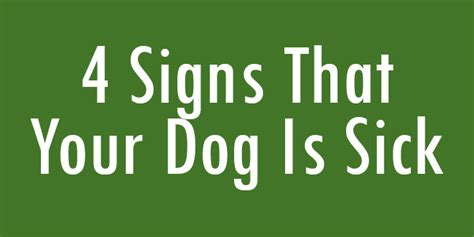 signs is sick 4 signs that your is sick doggyzoo comdoggyzoo