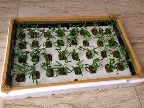 Tds Meter Bagus rumah hydroponic menanam kangkung