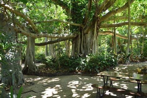 botanical gardens rockhton zoo garden ftempo