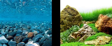 Backgrounds For Fish Tanks Printable Free Photo Collection Backgrounds For Fish Tanks Printable Free