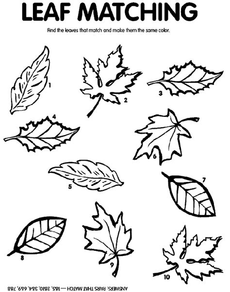 crayola coloring pages autumn leaves leaf matching crayola com au