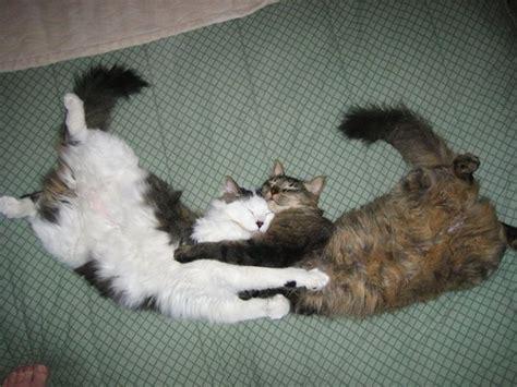 cat hugs cat hug 4 1funny