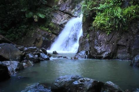 el turs el yunque rainforest guided hiking with waterfall tour
