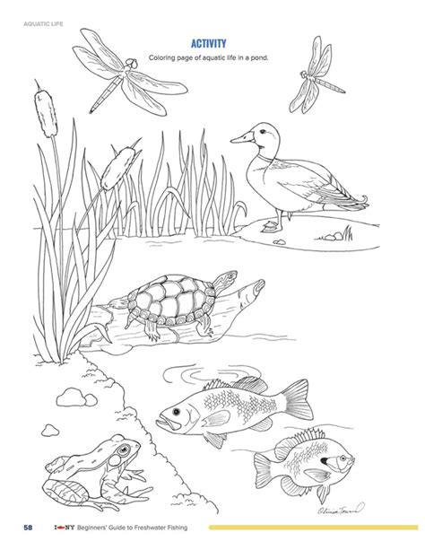 free coloring pages pond animals drawings olivia townsend