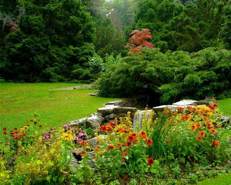 fiori giardino le piante da giardino giardinaggio piante per giardino
