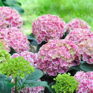 shrubs that flower all year when to prune your garden pruning calendar for plants