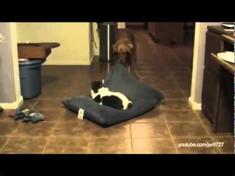 why don t cats and dogs get along this is the hilarious reason why cats and dogs don t get along