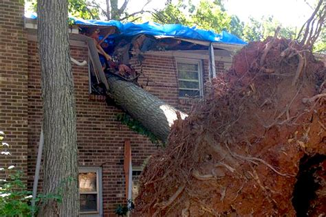 my neighbor s tree fell neighbor s dead tree fell on my fence project pdf download woodworkers source