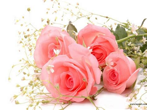 Bed Of Roses Meaning Garden Pink Roses Meaning Cool Flower Photography For