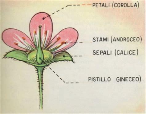 pistillo fiore professione donna parti della pianta il fiore