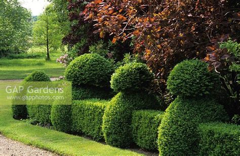 hedge topiary gap gardens buxus hedge and topiary at selehurst sussex