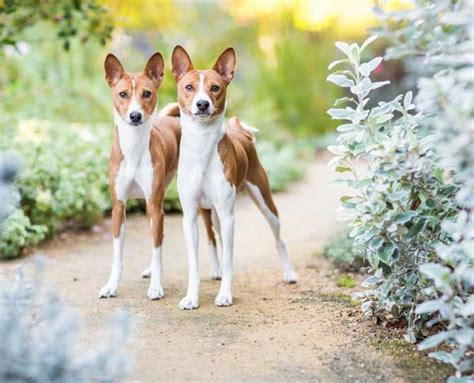 low dander dogs 1000 ideas about hypoallergenic breed on best small breeds