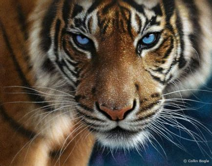 imagenes de tigres verdes tigres serunserdeluz