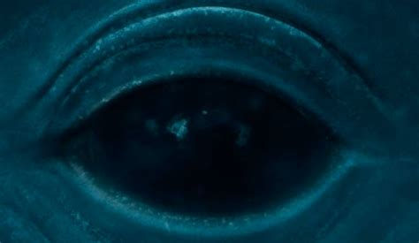 whale eye size whale in your browser 183 matt northam