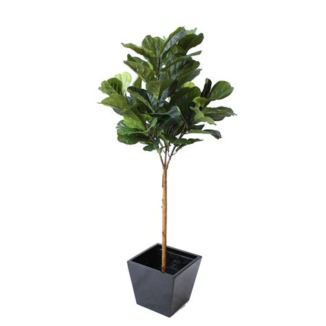 fiddle fig tree artificial fiddle leaf fig tree 1 5m in fibreglass pot