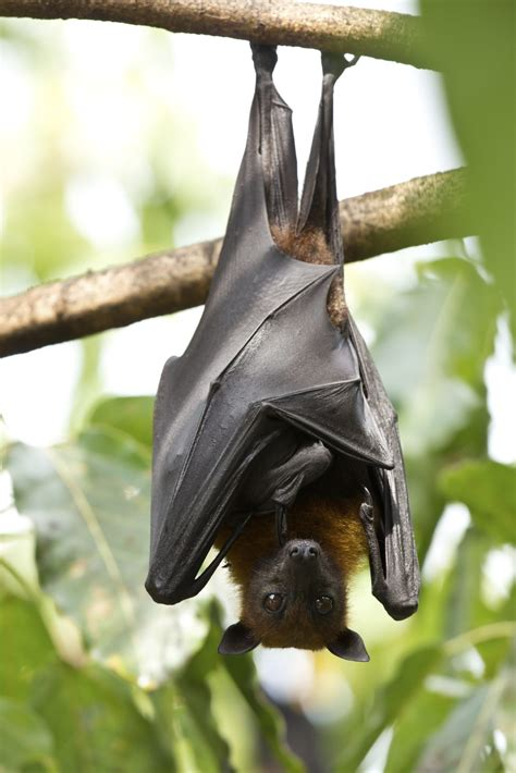 bat dung  bat guano   garden