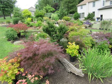 landscaping with maple trees everything you need to about japanese maples turpin landscaping