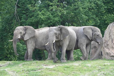 ausflugsziel opel zoo in kronberg im taunus doatrip de