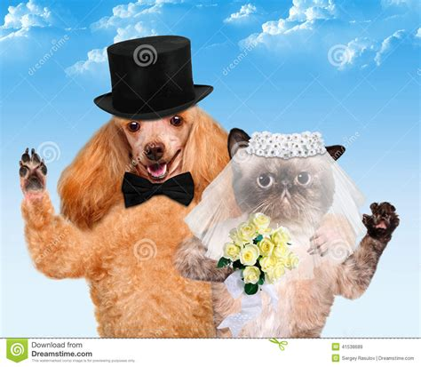 cat and puppy cat and wedding stock photo image 41538689