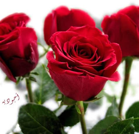 imagenes de flores mas bonitas fotos de flores bonitas