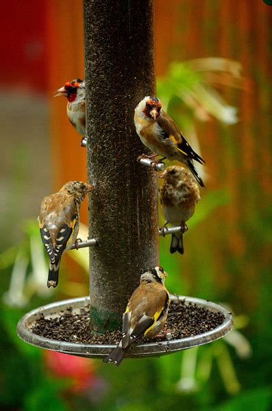 garden birds your green shoots photographs environment