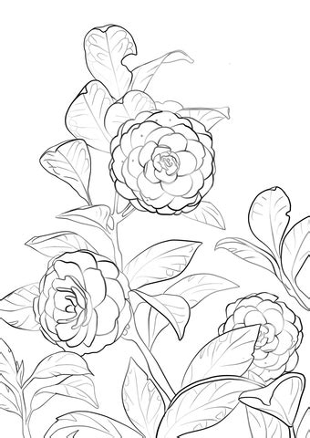camellia flower coloring page japanese camellia flower types coloring page flowers