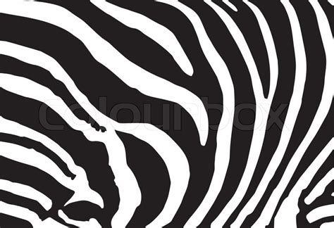 zebra pattern print out vector abstract skin texture of zebra print pattern