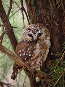 pictures of owls for beautiful owl owls