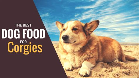 best food for corgi puppy let s talk nutrition best foods for corgis 2018 top picks reviewed