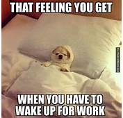 Funny Animal Memes About Work