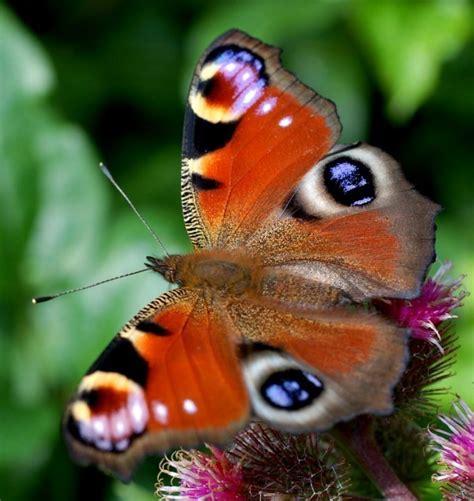 imagenes de mariposas las mas hermosas las mariposas m 225 s bellas del mundo im 225 genes taringa