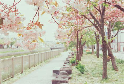 themes for tumblr japan 24 sakuras