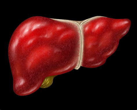 19 Foods To Detox Liver by 19 Foods To Naturally Cleanse Your Liver Just