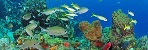 dive vacations scuba diving vacations