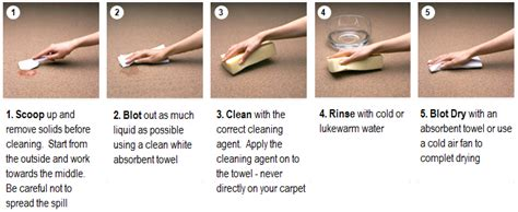 Blot Then Re Apply by Area Rug Cleaning Carpet Tech
