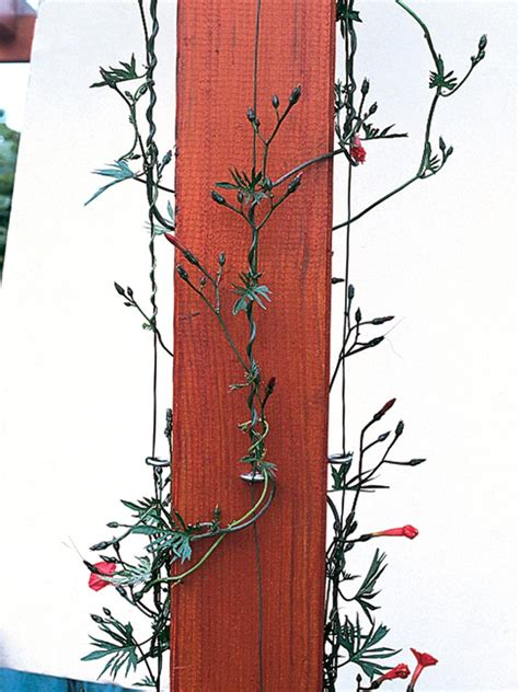 wire for climbing plants how to choose and maintain climbing plants diy