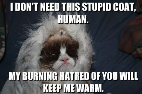 Frown Cat Meme - 17 best images about put your best frown forward