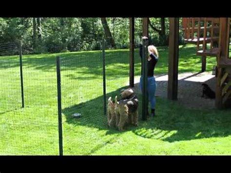 dog yard option dog proof dog fence ideas picture collection of fences for outdoor