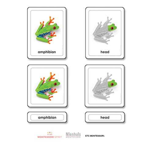 3 part cards parts of a frog righttolearn com sg