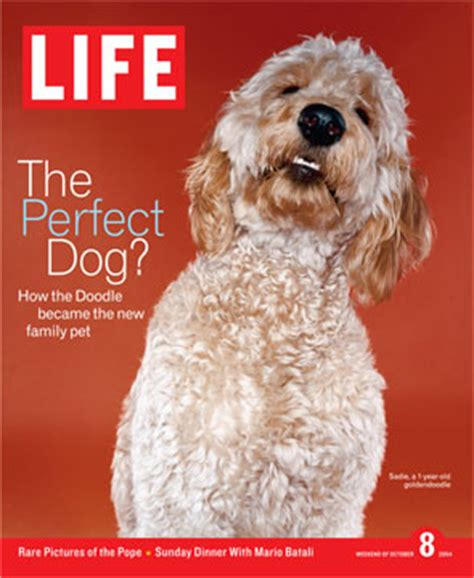 doodle lifespan how has goldendoodles changed the years